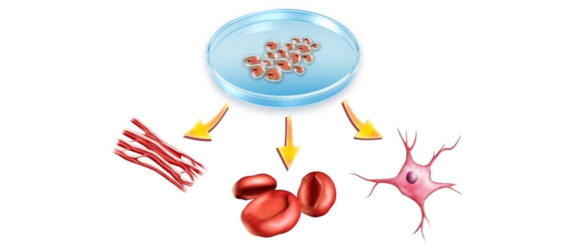 Усиление синтеза белка