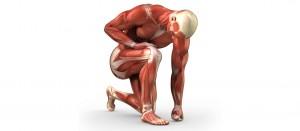 Небелковые компоненты мышц