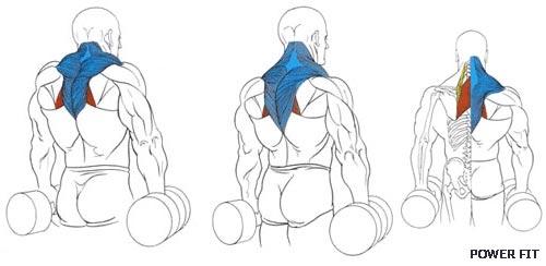 Легко! Накачать мышцы шеи в домашних условиях: упражнения.