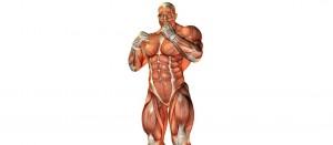 Формула роста мышц